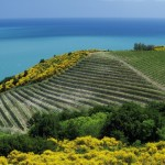 Percorsi tra natura e storia a Gabicce Mare